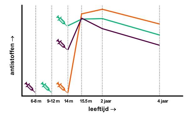 Figuur 2 schematische toename en afname van antistoffen.